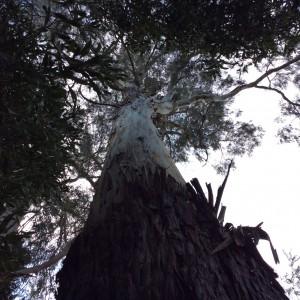 サンクチュアリ動物園の木