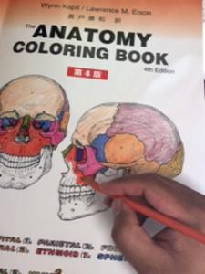 解剖学塗り絵